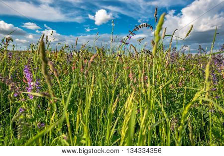 summer meadow on blue sky background in Germany