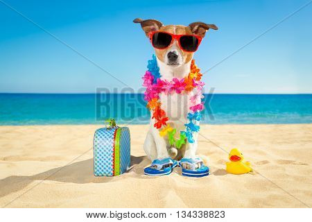 Tourist Dog At The Beach