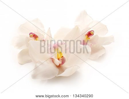 Beautiful white orchids on white background