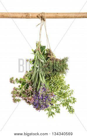 Fresh herbs hanging isolated on white background. Thyme oregano marjoram lavender. Food ingredients