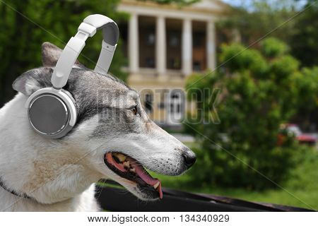 Dog in headphones sitting on bench in park