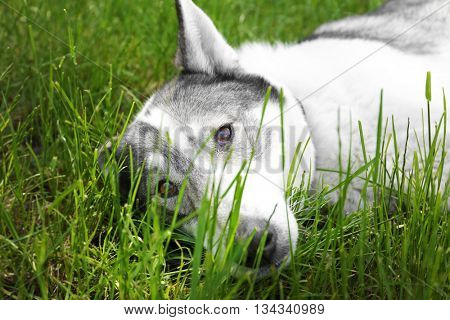 Dog on green grass in the park
