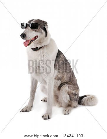 Dog wearing glasses isolated on white