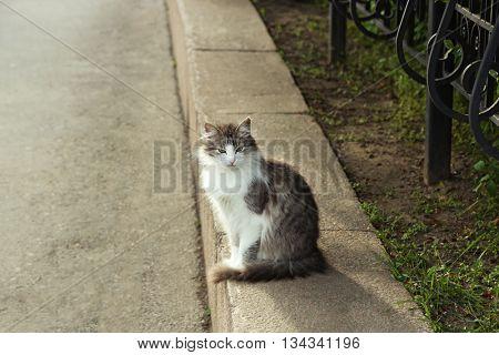 Cute cat on street