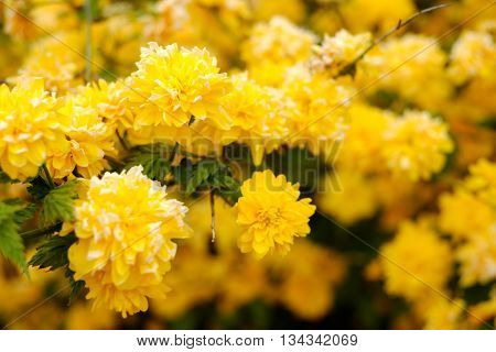 Yellow flowers on a tree background