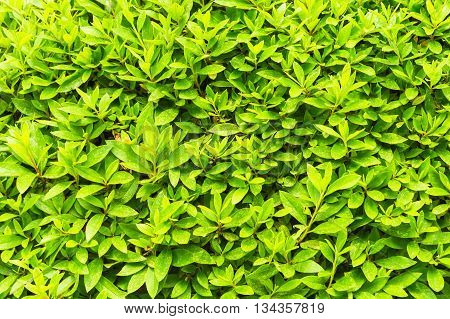 Green leaf tiny green leaf natural green background texture