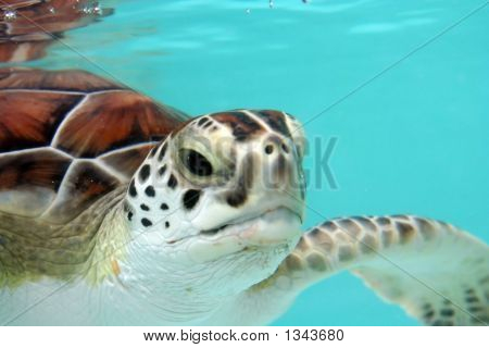 Water Turtle Closeup