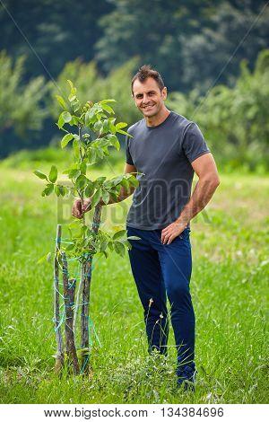 Farmer Checking His Walnut Trees