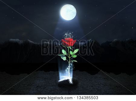 Concept of strong. Magic Rose escapes from the soil on the mountains background below moonlight at night. Concept of life.
