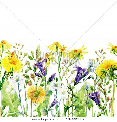 Meadow watercolor flowers card. Watercolor wild bellflowers dandelion daisy weeds and herbs background. Hand painted natural illustration