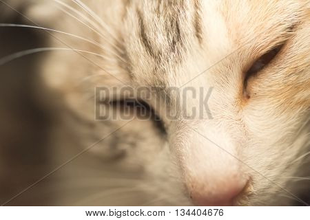 Domestic cat, closeup portrait with face.