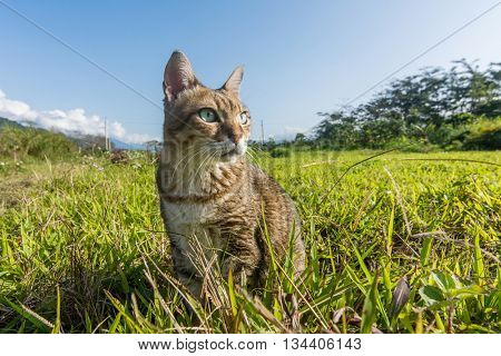 Cute domestic cat walk in the outdoor.