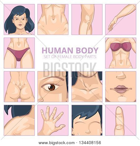 Female body parts in cartoon style. Vector icons set. Body girl, human body woman, health body parts illustration