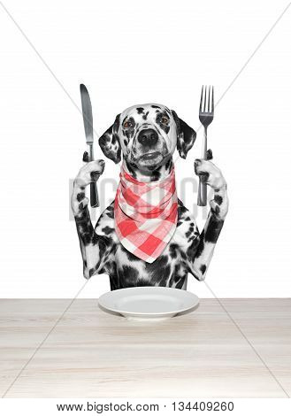 dog finished to eat and hold knife and fork -- isolated on white
