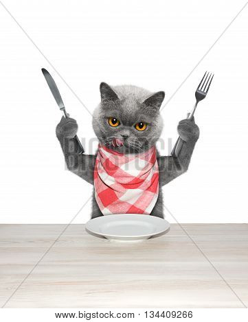 cat finished to eat and hold knife and fork -- isolated on white