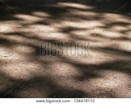 Beautiful tree shadow pattern on a ground