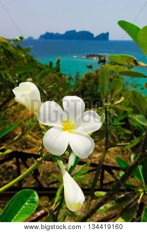 Flower Perspective Tropical Verdure