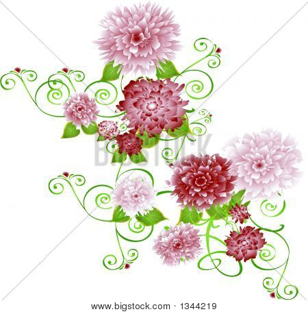Burgandycarnations.Eps