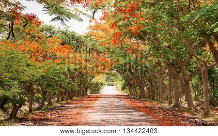 road in rural area through tunnel of trees with orange flower fall to the ground