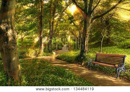 Bench in summer park with old trees and walking paths in the morning sun.