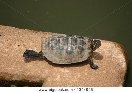 a turtle stretching one back leg