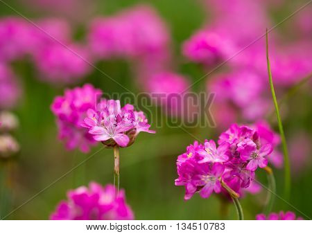 Colorful flowers in summer garden, for background. Selective focus