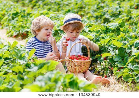 Two little sibling kids boys having fun on strawberry farm in summer. Children, cute twins eating healthy organic food, fresh berries as snack.
