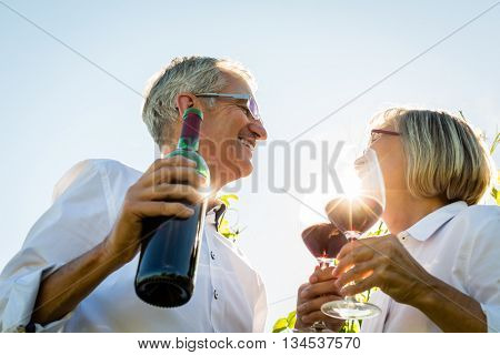 Senior couple toasting with wine glasses in vineyard, woman and man toasting each other