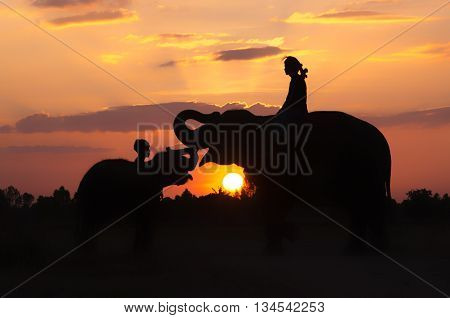 Mahout riding an elephant on the sunset