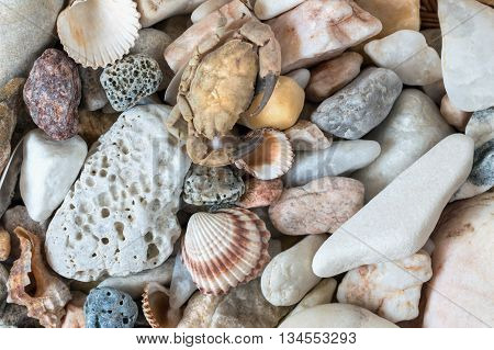 Detail of the various sea pebbles with shells