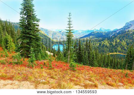 Nice landscape at Mount Rainier national park Washington