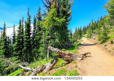 Summer Hike At Mount Rainier National Park With View Of Mt.rainier.