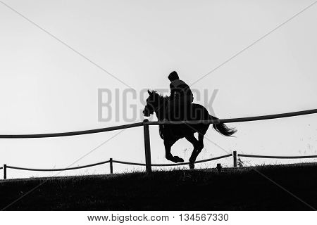 Race horse rider training track action morning silhouetted black white landscape.