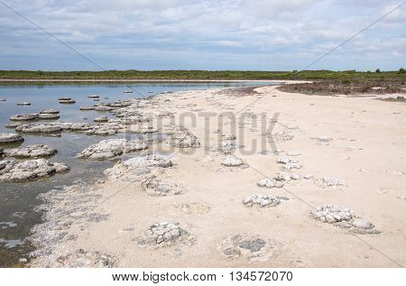 Lake Thetis during a drought with rare stromatolites, sandy bank and saline lake under an overcast sky in Western Australia. poster
