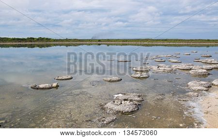 Rare natural phenomena, stromatolites, in the Lake Thetis landscape with sand under an overcast sky in Western Australia.