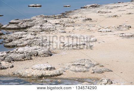 Rare living marine fossils, stromatolites, in the Lake Thetis during a drought with sandy bank in Western Australia. poster