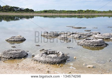 Rare living marine fossils, stromatolites, in the Lake Thetis landscape with sand under an overcast sky in Western Australia. poster
