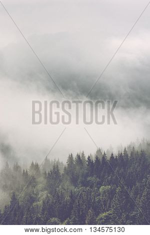 Atmospheric misty landscape with thick mist billowing through a mountain valley forested with pine trees, vertical with copy space