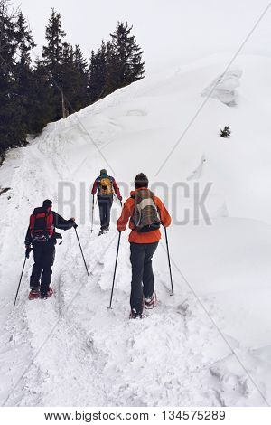 Team of fit people wearing backpacks snowshoeing traversing a snowy mountain slope moving away from the camera towards pine trees