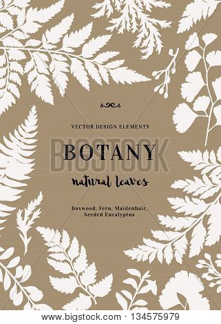 Botanical illustration with leaves. Boxwood seeded eucalyptus fern maidenhair. Design elements. Vector. Silhouette.