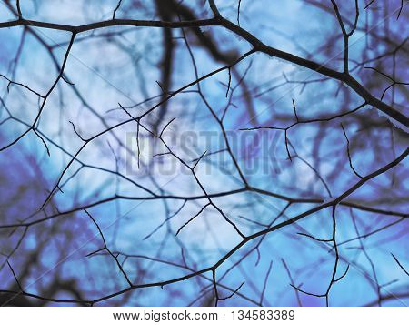 Bare tree branches are against a cold blue winter sky for a seasonal or texture background. There are black lines.