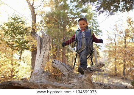 Boy in a forest looking down as he walks along a fallen tree