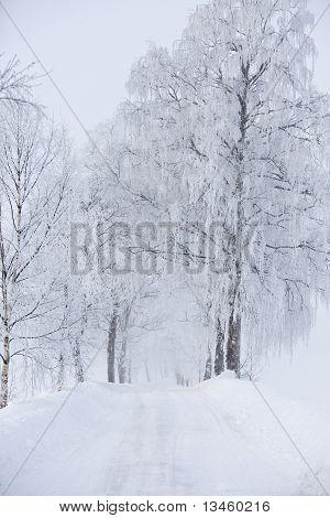 Dirt Road At Winter