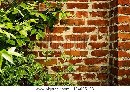 Old brick wall overgrown with green bushes and grass