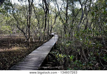 Photo closeup of path walkway made of wood along muddy bank of river among green plants bushes trees at day time in summer.