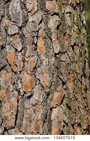Tree bark background at wooded area Georgia, USA.