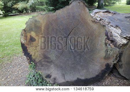 Mammon Tree