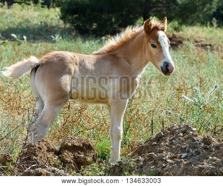 Baby horse isolated. Filly standing on grass.