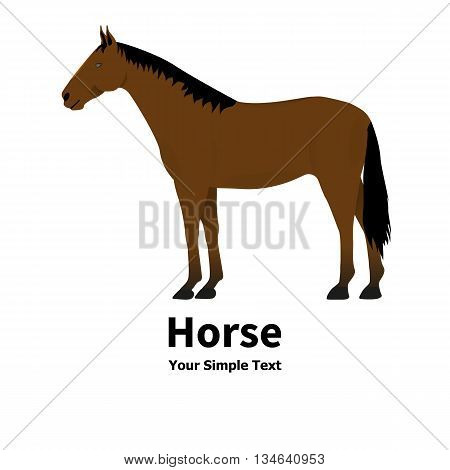 Vector illustration of a pet horse. On an isolated white background. Standing right horse. Horse side view profile.
