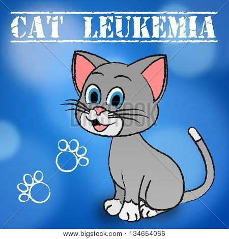 Cat Leukemia Indicates Bone Marrow And Cancer